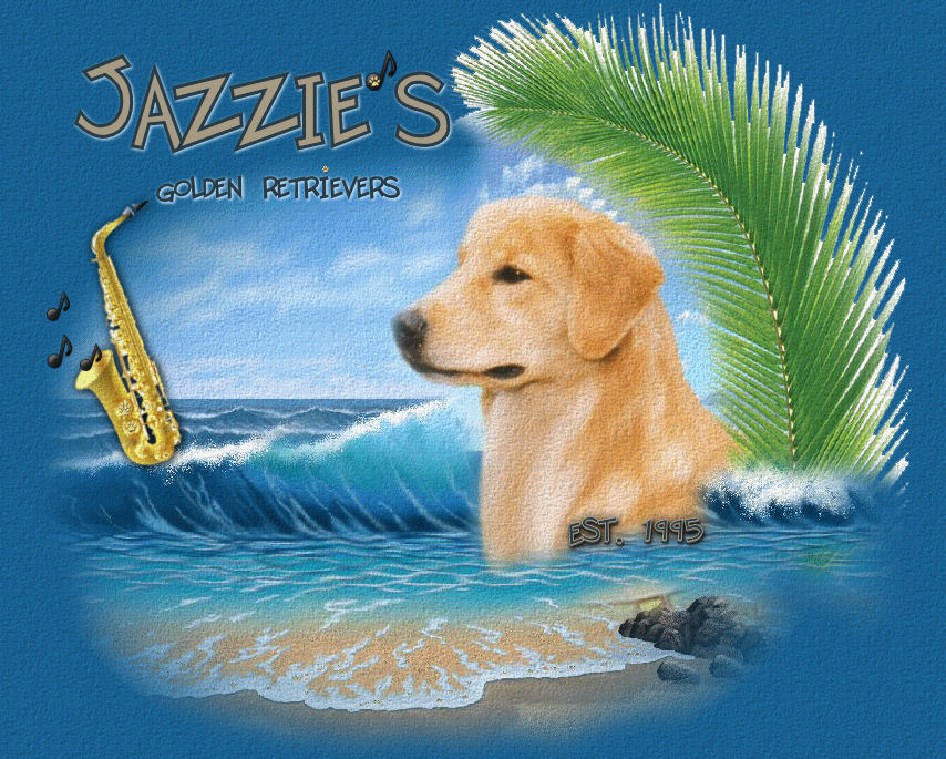 Jazzie's Goldens, Golden Retreivers, Satellite Beach, Florida